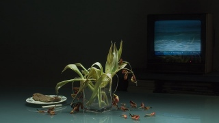 [image: AvW on-time, still life I - still 06]